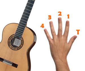 Les noms et les numéros des doigts à la guitare